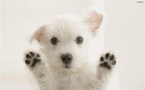 puppies background puppies wallpaper desktop 28 desktop background hivewallpaper