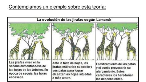 imagenes de las jirafas de darwin lamarck