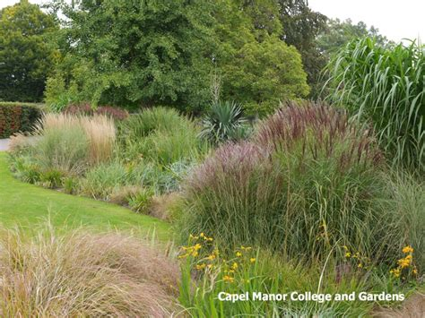 looking great in the gardens this october capel manor