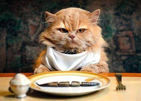 alimentazione gatti quanto deve mangiare un gatto consigli per una giusta