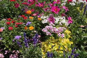 Flowers For Gardens Perennials Perennial Flowers