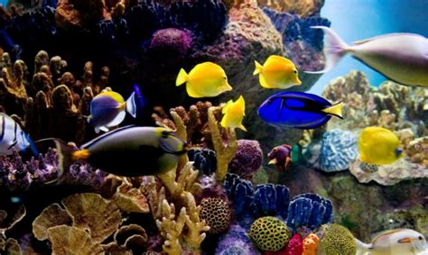 Great Tas Belanja Lipat Nemo Fish acuario para peces tropicales de agua salada decogarden