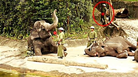 funny elephant tricks  singapore zoo youtube