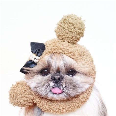 shih tzu websites best 25 website ideas on fc book textbooks for cheap and texting