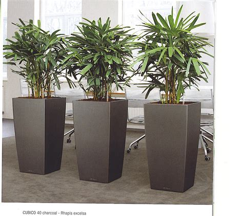 Plants For Office | 41 best office plants images on pinterest gardening