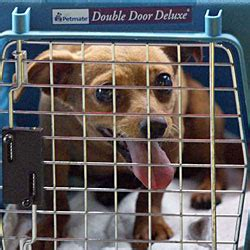 Westjet Pet Policy In Cabin by Canadian Lung Assn Takes Aim At Air Canada S New Pet