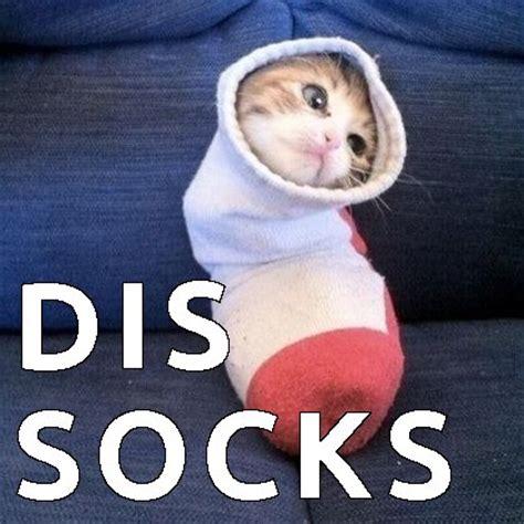 Meme Socks - fat cat maze i love casino slotsi image 2764325 by