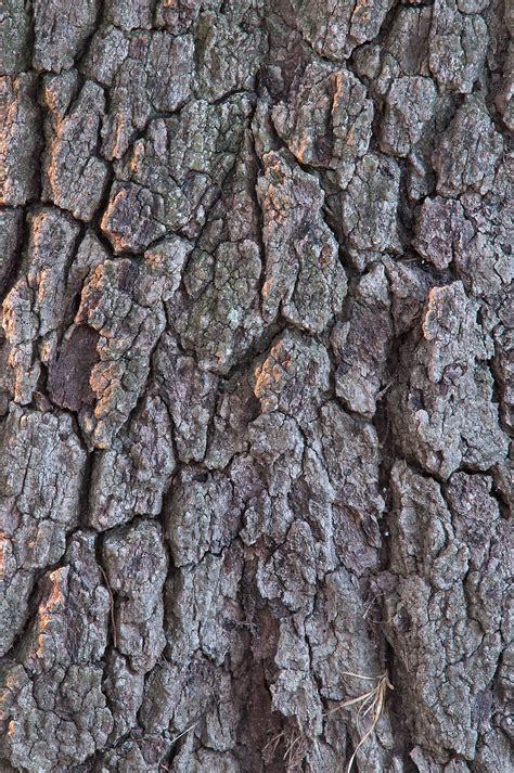 tree bark search in pictures