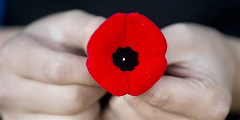 poppy facts remembrance day images