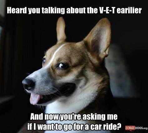 Corgi Meme - corgi puppy meme www pixshark com images galleries