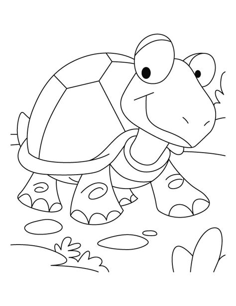 Tortoise Coloring Page tortoise coloring page az coloring pages