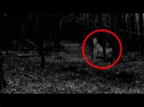 real pictures of the demons | www.pixshark.com images