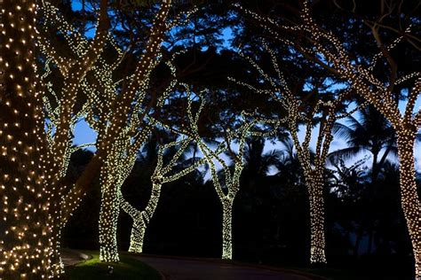 installation of fairy lights in trees the best solar powered lights guide uk 2016