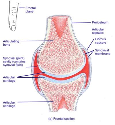 what causes joint clicking sundial chiropractic