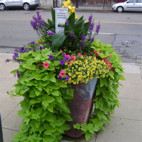 Summer Planters Ideas by October 2010 Distinctly Downtown