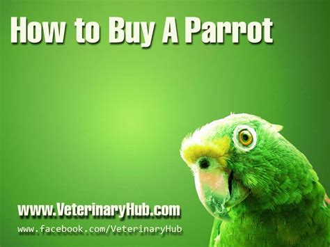 Buys A Parakeet by Index Of Wp Content Uploads 2013 08