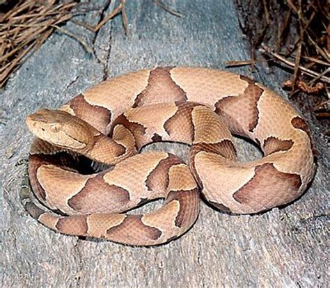by ruth palmer piles of reptiles pinterest you might want to clear out brush near the edge of the