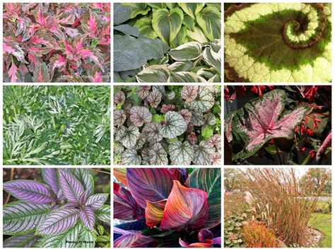 best types of foliage plants