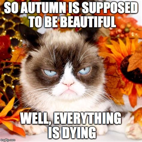autumn meme image tagged in grumpy cat autumn imgflip