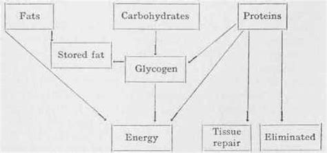 what s the function of carbohydrates carbohydrates what is the function of carbohydrates for