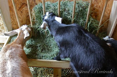 Feeder Goats homestead revival feeders and water for goats