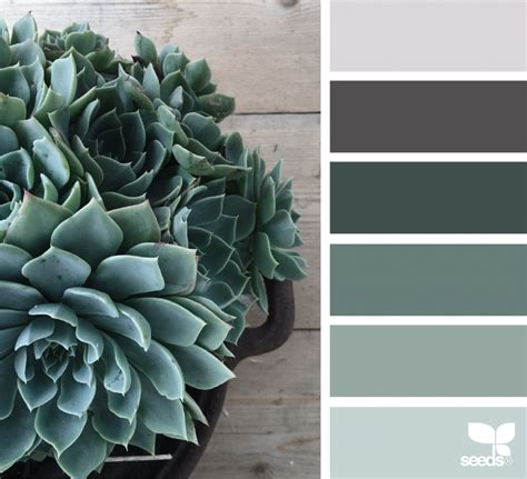 design seeds succulent tones design seeds