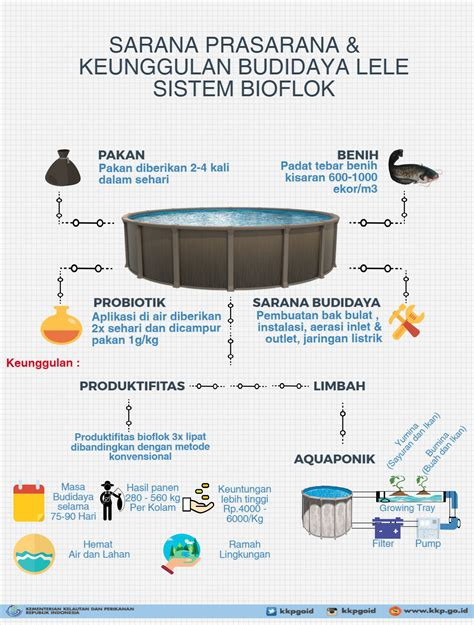 Pakan Ikan Lele Bioflok lele bioflok solusi penuhi kebutuhan gizi masyarakat