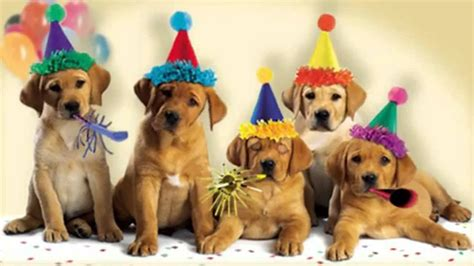 happy birthday pictures with dogs dogs bark the happy birthday song mp4