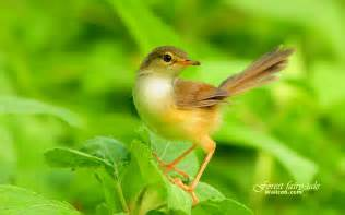 Bird Wallpapers forest fairy tale beautiful birds in the forest