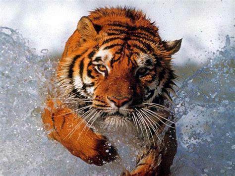 imagenes en 3d animales imagenes con movimiento 3d tigres imagui