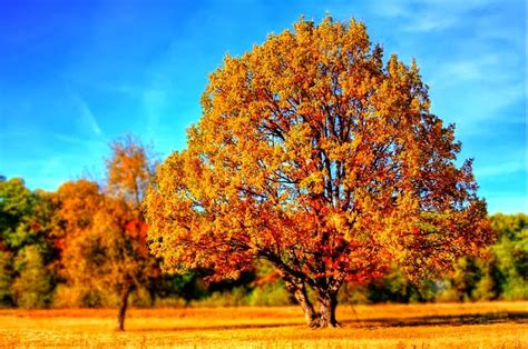 google images fall leaves free technology for teachers the science of autumn colors
