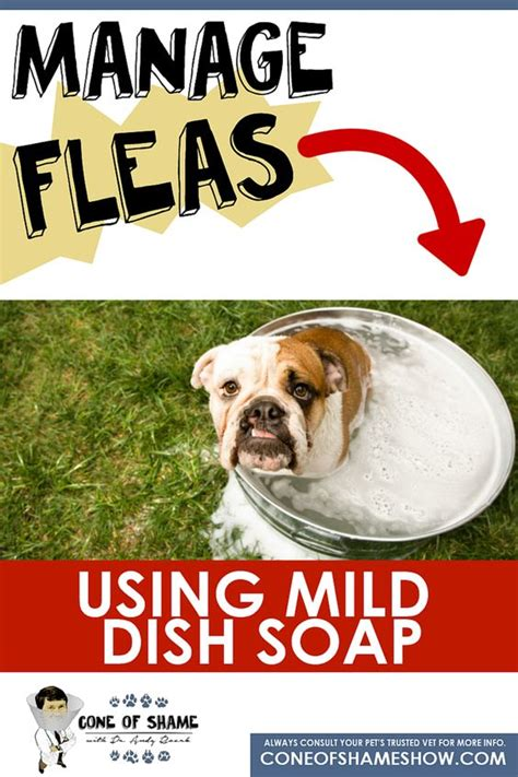 dish soap for fleas on puppies the world s catalog of ideas
