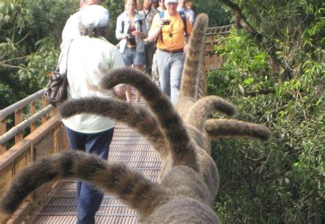 The Gill Family: Iguazu Falls   Wildlife