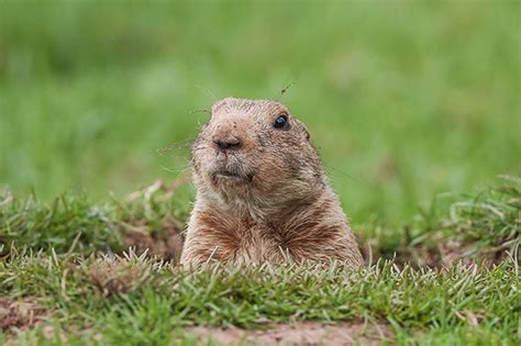 groundhog day is groundhog day security cso