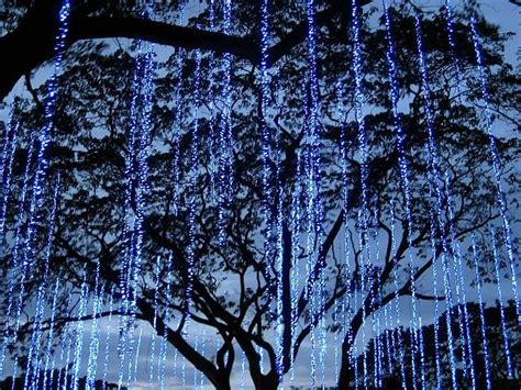 string lights hanging from trees omgoshhh it looks like