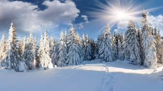 great xmas snow wallpaper pics 2560x1440 path winter snow tree forest the sun forest clouds wallpapers and
