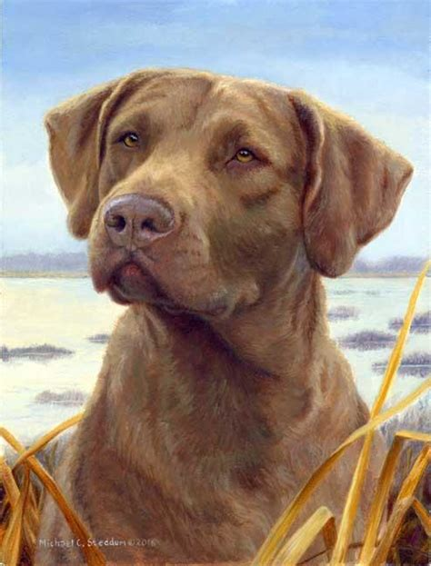 chesapeake bay golden retriever quot favored quot a limited edition chesapeake bay retriever print michael steddum