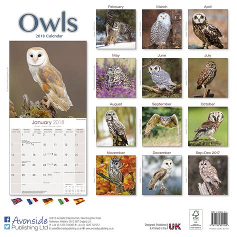 wisdom owl 2018 calendar owl 2018 monthly calendar books owls calendar 2018 pet prints inc