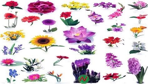 all flowers name in with pictures impremedia net