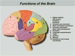 brain injury brain de caro kaplen llp