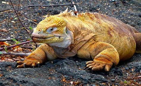 galapagos islands animals a guide to the galapagos islands animals nature