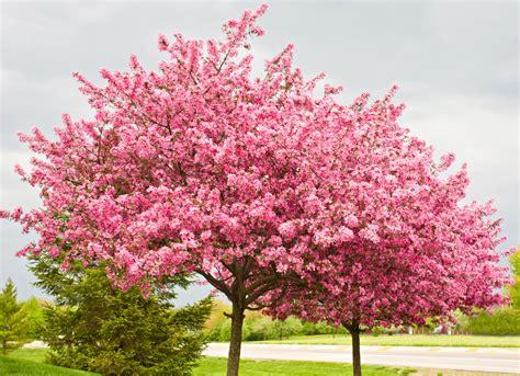 backyard tree best trees to plant 10 options for the backyard bob vila