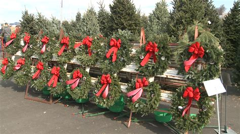 connecticut christmas tree growers opening for season