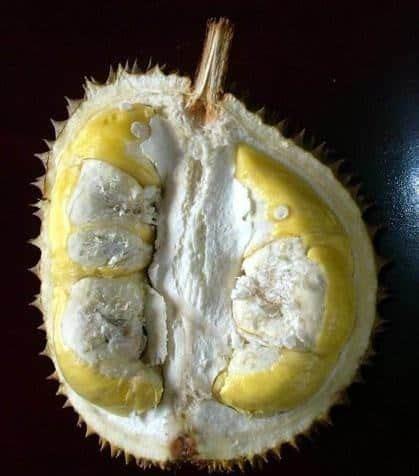 Bibit Durian Musang King Makassar jual tanaman durian matahari bibit