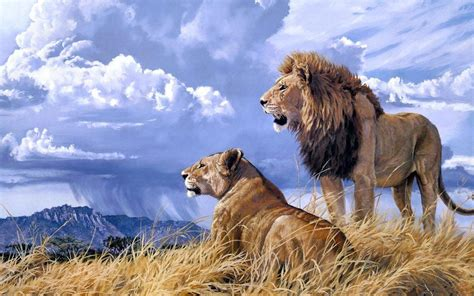 google images lion lions hd wallpaper android apps on google play
