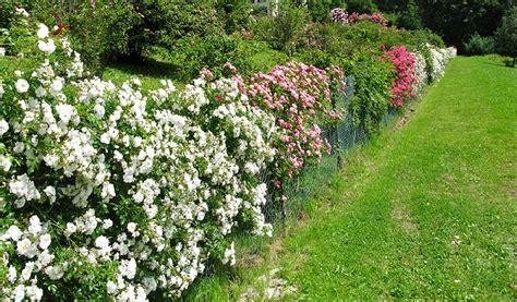 piante infestanti giardino piante giardino libere da infestanti e ben concimate