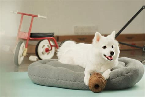 is your bed made is your sweater on qanvast hacks turn your sweater into a pet bed qanvast