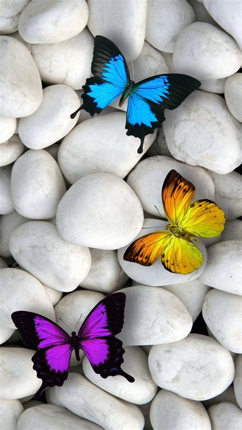 wallpaper iphone 6 butterfly cool fond decran iphone 7 hd 62 check more at http all