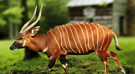 150 M To Ft bongo facts history useful information and amazing pictures
