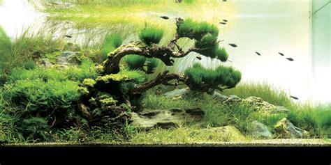 Aquascape Aquarium by An Intermediate Guide To Aquascaping Aquaec Tropical Fish